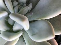 *SucculentCloseUp.jpg